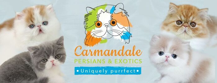 Carmandale Persians & Exotics